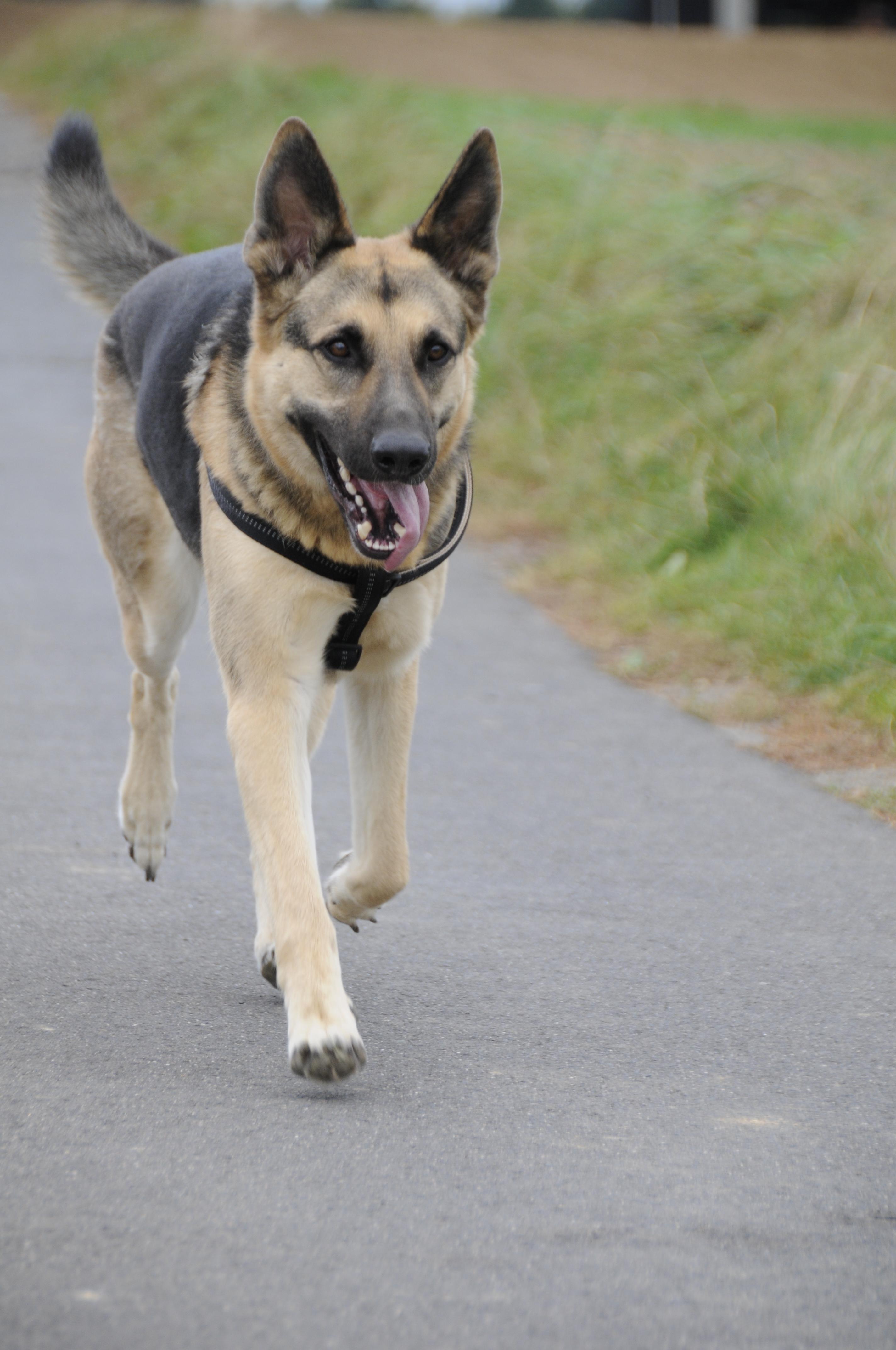 Kurzmeldung Epilepsie Beim Hund Bundesverband Für Tiergesundheit Ev