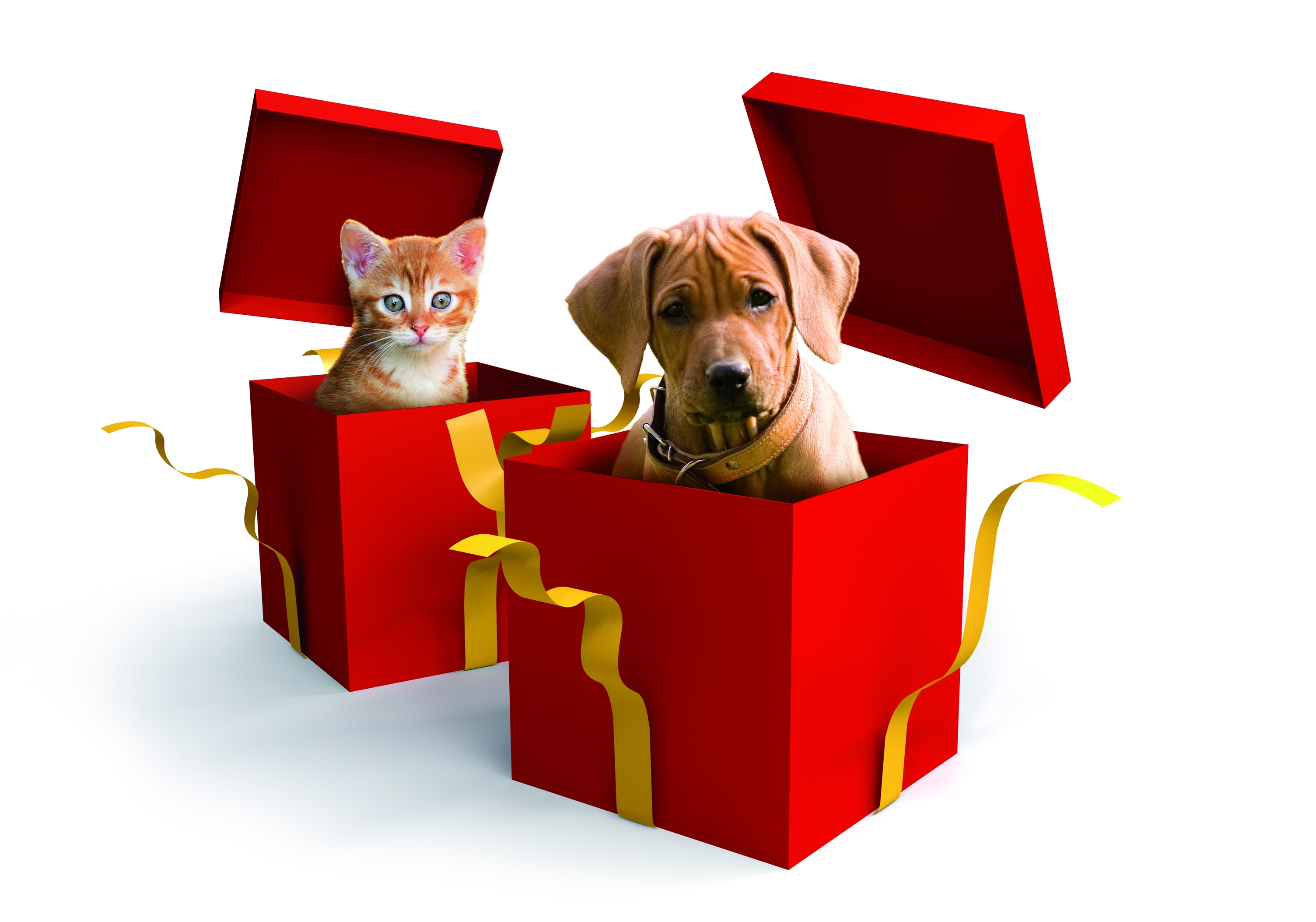 Bilder Weihnachten Tiere.Tiere Zu Weihnachten Bundesverband Für Tiergesundheit E V