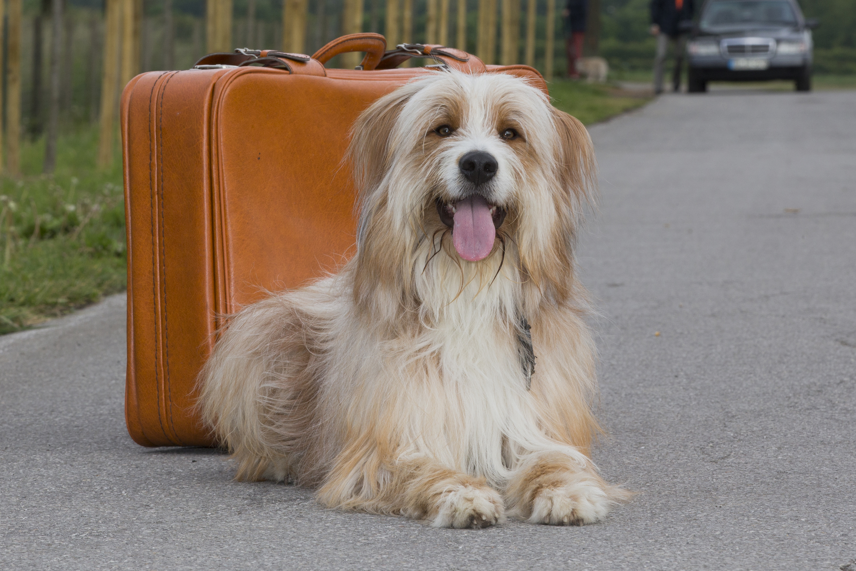 kurzmeldung reisen mit dem hund bundesverband f r tiergesundheit e v. Black Bedroom Furniture Sets. Home Design Ideas